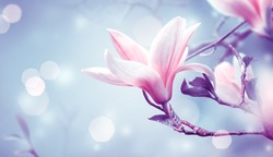Blooming pink magnolia flower on fantasy mysterious blue background with shining glowing bokeh, fabulous spring fairy tale floral garden, amazing magnificent nature