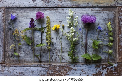Stock photo of blooming plant samples lying at gray wooden plate