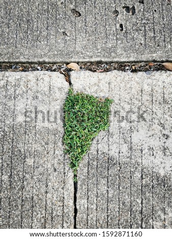 Blooming Plants on cracked concrete floor. Hope Concept, Efforts, Encouragement