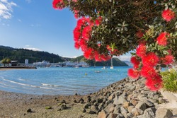 Blooming pohutukawa tree against Picton harbour