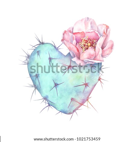 Blooming prickly pear cactus isolated on white background. Watercolor hand drawn illustration of heart shaped cactus.