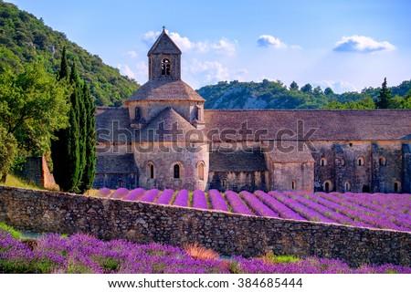 blooming purple lavender fields ...