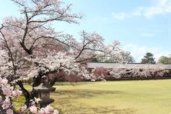 Blooming sakura trees in garden near to Todaiji Temple (Great Eastern Temple), Nara, Japan. Japanese hanami festival when people enjoy sakura blossom. Cherry blossoming season in Japan