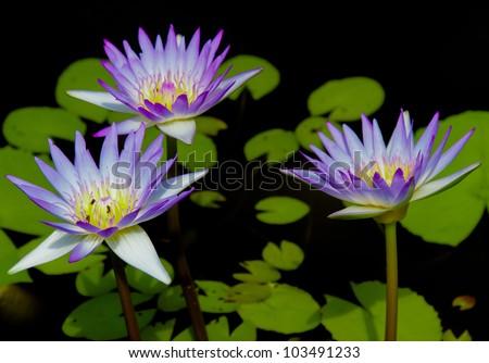 Blooming Serenity Exotic Bloom