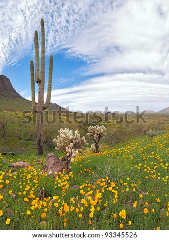 Blooming Sonoran Desert at Picacho Peak State Park.