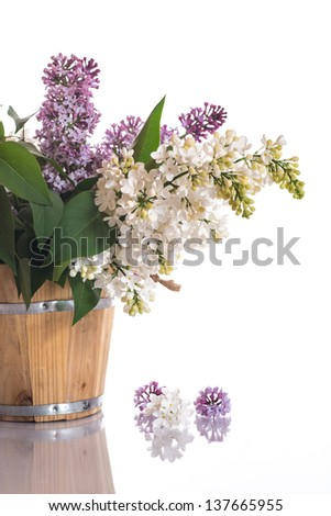blooming spring lilac on a white background