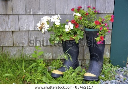 Blooming Summer Flowers Planted In Old Rubber Boots Stock