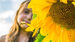 Blooming sunflower, flying bee and little girl. Flying bee to sunflower.