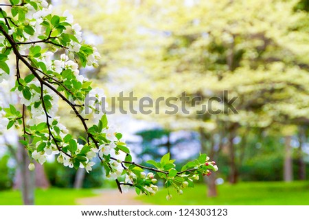 Blooming tree at spring, blossom garden blurry background, selective focus