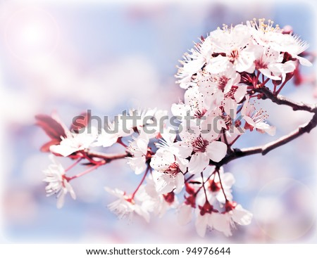 Blooming tree at spring, fresh pink flowers on the branch of fruit tree, plant blossom abstract background, seasonal nature beauty, dreamy soft focus picture