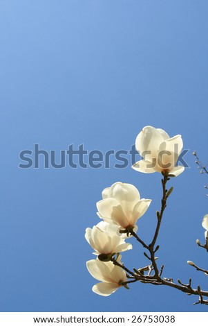 Blooming Tree Flowers in Spring Time