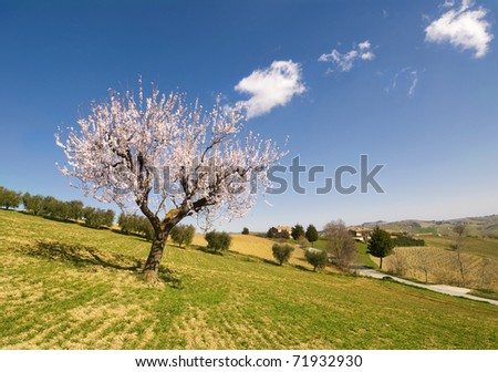 Blooming tree standing alone in a field