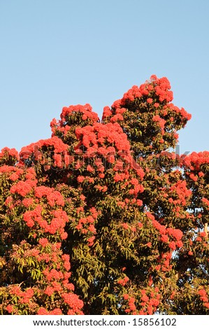 Blooming tree with red flowers against blue sky