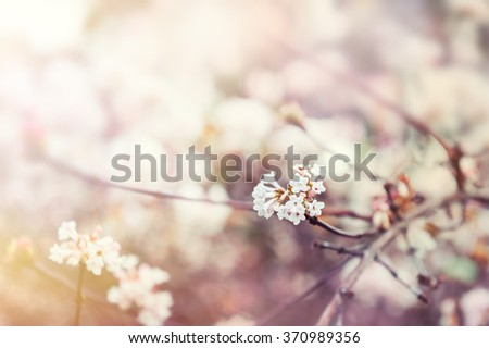 blooming tree with white...