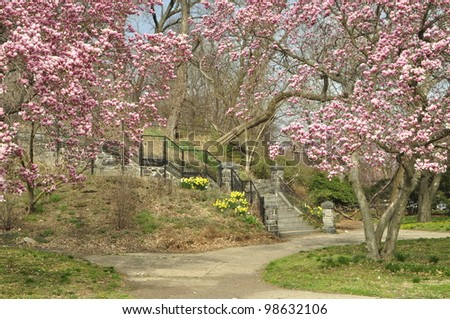 Blooming trees at a Philadelphia spring