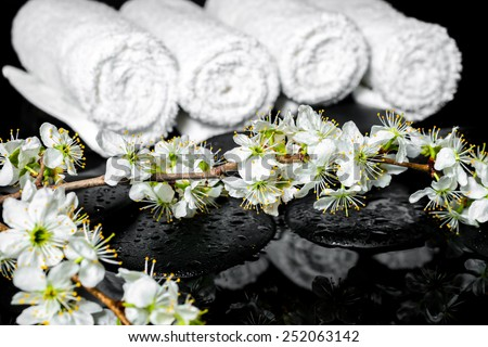 blooming twig of plum, white towels on zen stones with reflection water, spa background
