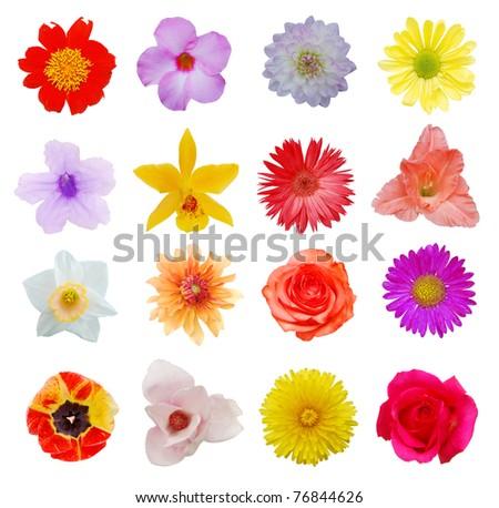 Blooms in summer season