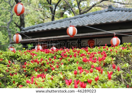 blossom azalea bushes in the yard of Japanese temple; focus on central part of the bush - stock photo