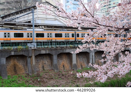 blossom cherry branch over moving trains during springtime in Tokyo, Japan; focus on branch