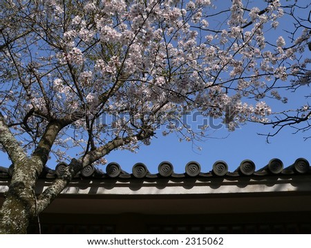 blossom cherry branch over the temple roof, Japan