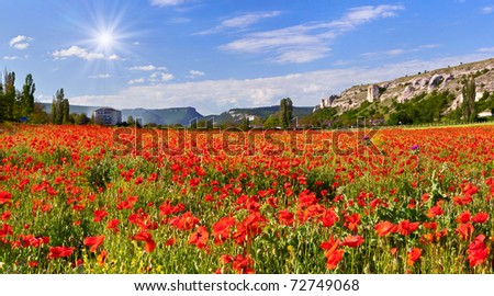 Blossom field of poppies in the spring