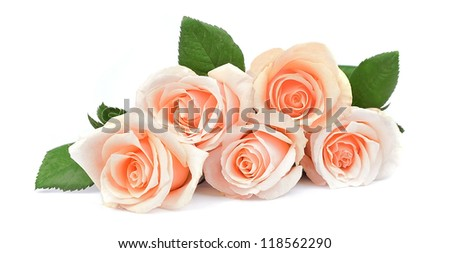 blossom pink- creamy roses on white