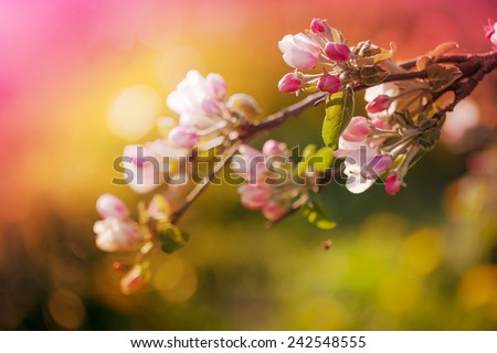 Blossom tree over nature background Spring flowers Spring Background