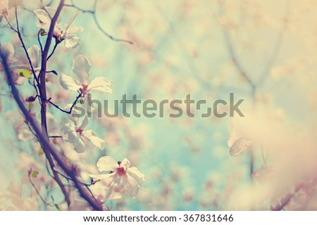 Blossom tree over nature background/ Spring flowers/Spring Background #367831646