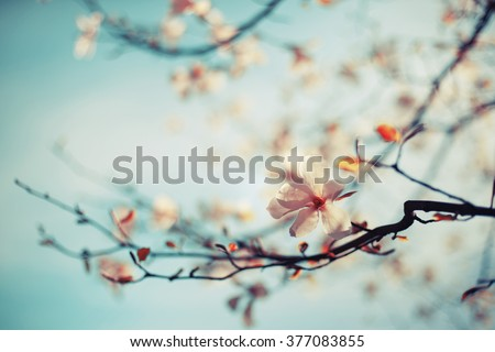 stock photo blossom tree over nature background spring flowers spring background 377083855 - Каталог — Фотообои «Природа, пейзаж»