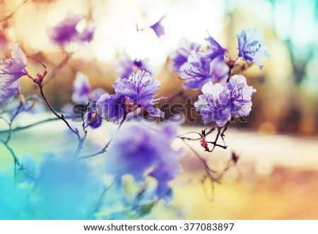 stock photo blossom tree over nature background spring flowers spring background 377083897 - Каталог — Фотообои «Цветы»