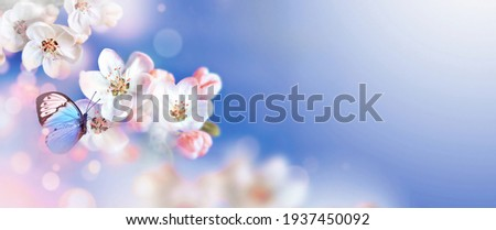 Blossom tree over nature background with butterfly. Spring flowers. Spring background. Blurred concept.