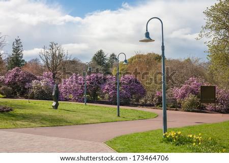 Blossoming bushes in public city garden, Scotland, Edinburgh Royal Botanical Garden