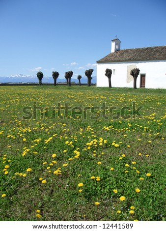Blossoming dandelions field near a country church in spring