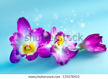 Blossoming flower exotic orchid for background postcards