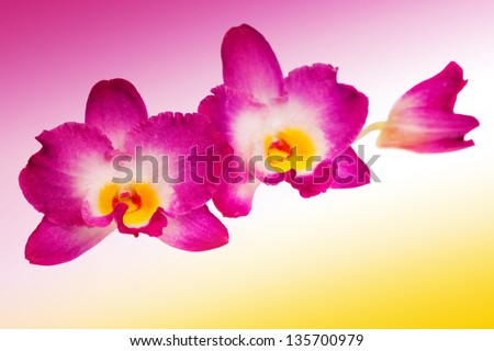 Blossoming flower exotic orchid on a background