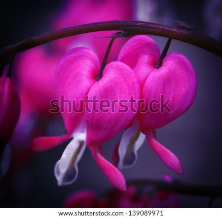Blossoming garden flowers