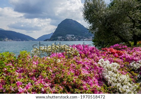 Blossoming pink and white flowers in the Ciani Park along Lake Lugano (Ticino, Switzerland), with Monte San Salvatore in the background. Zdjęcia stock ©