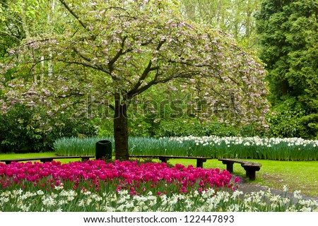 blossoming tree and blooming flowers in dutch garden 'Keukenhof', Holland