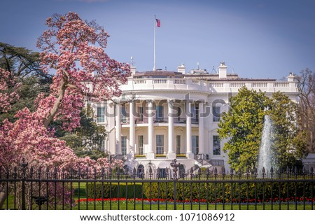 Blossoms at the White House in spring