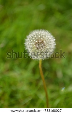 Blow and make a wish #733168027