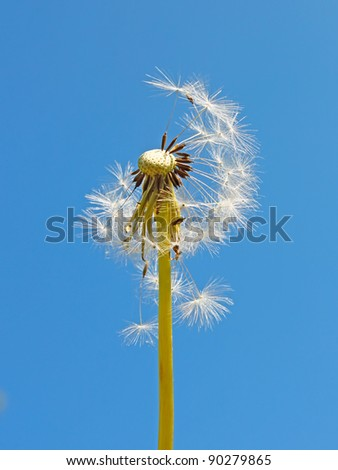 Blowball against the background of a blue sky
