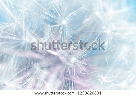 Blowball dandelion abstract macro blue background. Shallow depth of field
