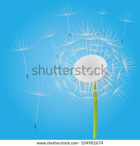 Blowing dandelion on the blue sky