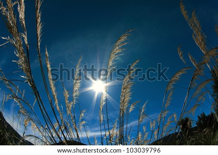 Blowy Grass Under The Sun