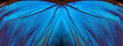 Blue abstract pattern. Wings of a butterfly Morpho texture background. Morpho butterfly
