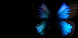 Blue abstract pattern. Wings of the butterfly Ulysses. Wings of a butterfly texture background. Copy spaces