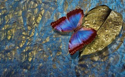 Blue and gold background. Golden leaf in drops of water and bright blue tropical morpho butterfly on a golden blue pastel background
