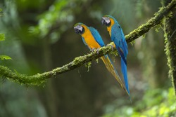 Blue and Gold Macaw ,Beautiful parrot