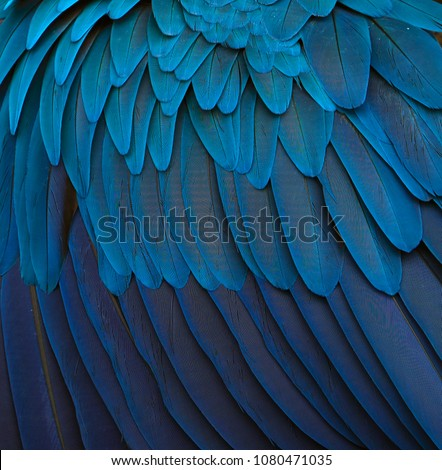 Blue and gold macaw feathers. The magic of the nature