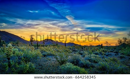 Blue and Gold Sunrise - Desert flora in full bloom provide a frame for a colorful Scottsdale,\n Arizona sunrise, rich with golds and blues.
